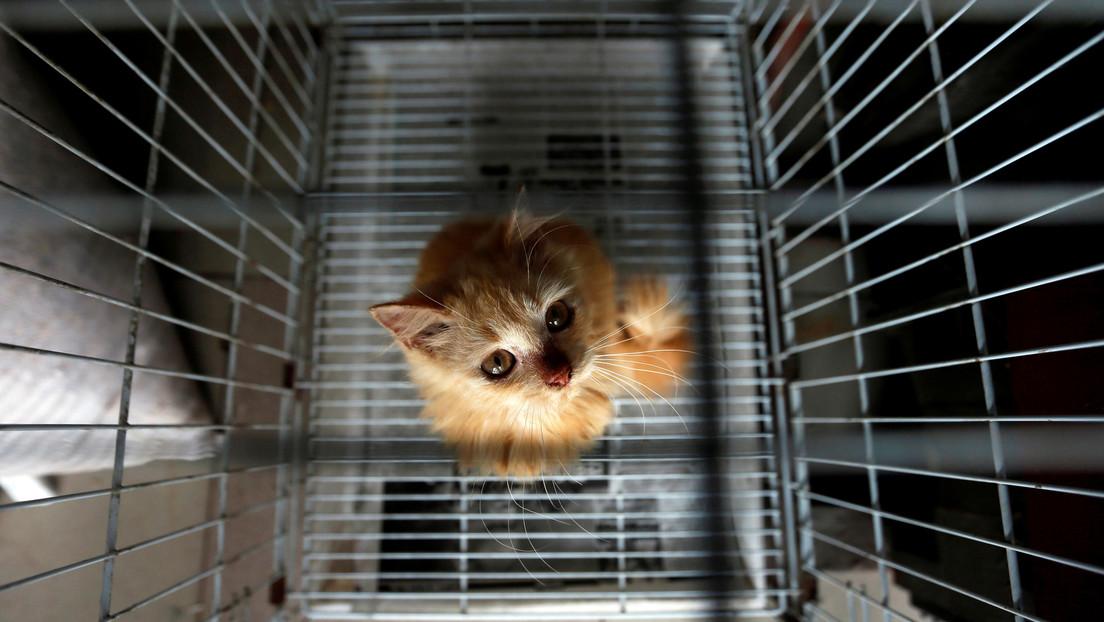 Gato preso