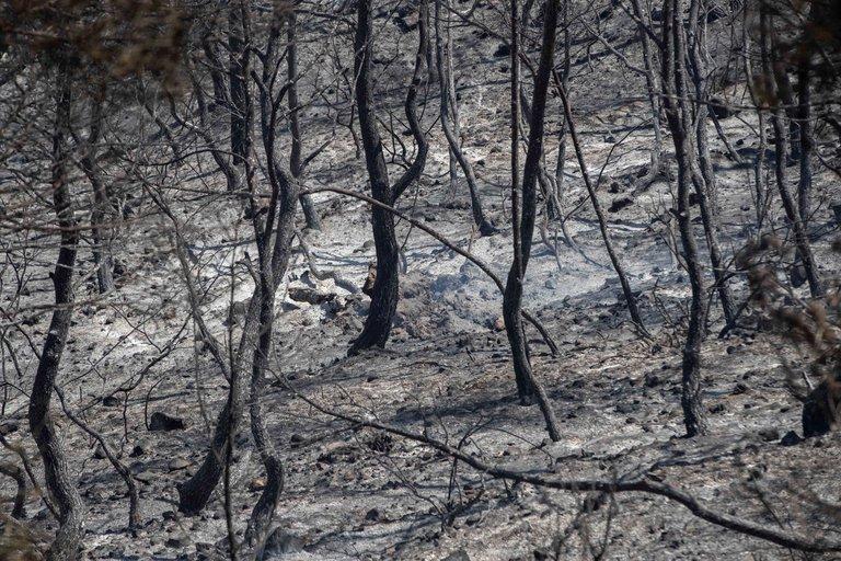hectareas-quemadas