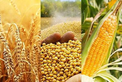 Chicago: clima favorable y ventas decepcionantes hacen caer precios de soja y trigo