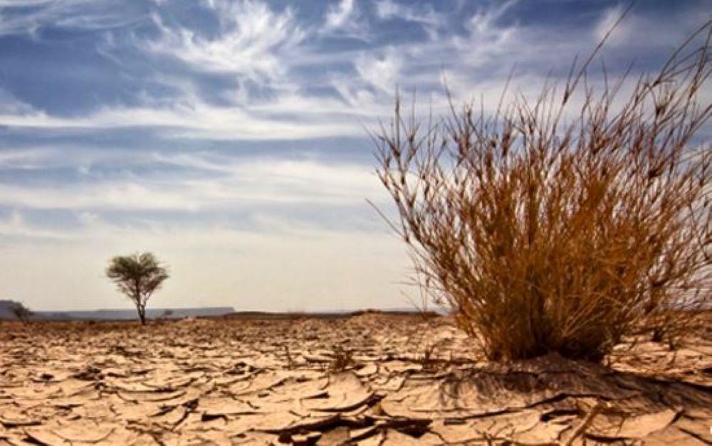 El COI quiere plantar 355.000 árboles contra la desertificación del Sahel