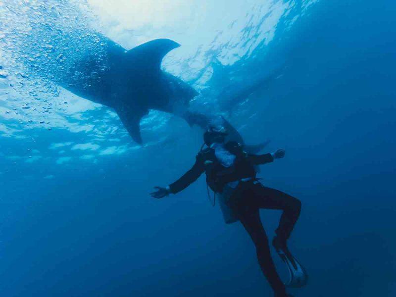 Un australiano acusado de robar un localizador de un tiburón blanco